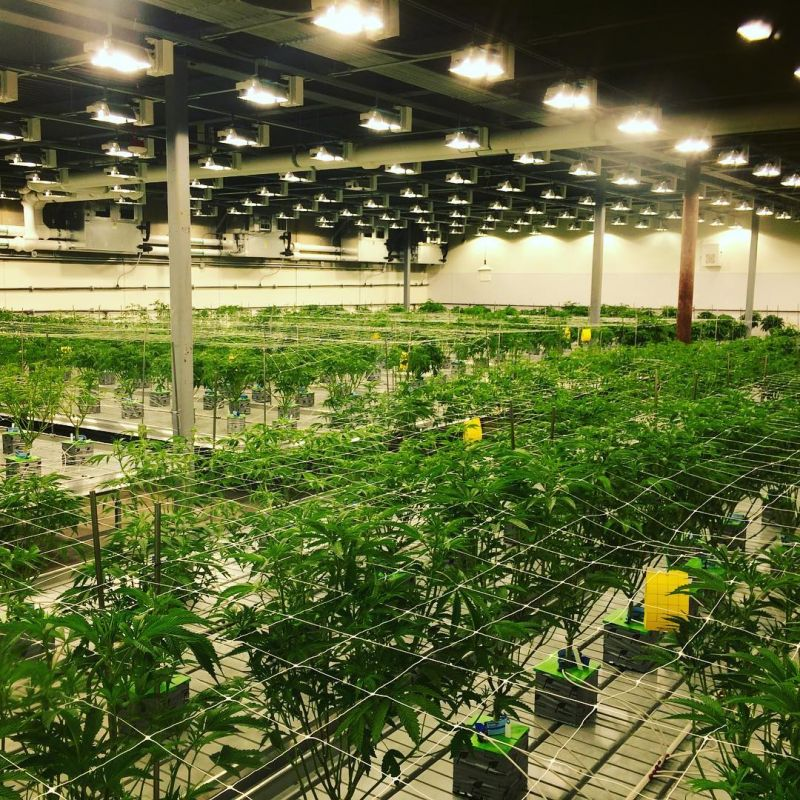 10 things to consider when buying benches for Plantation cannabis interieur