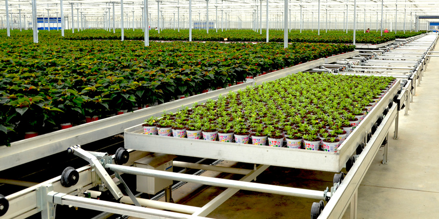 High capacity Automatic Transport Lines help growers avoid logistical bottlenecks during production peaks!